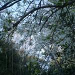 promenade_printemps_01
