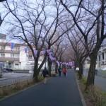 sakura_march