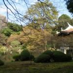 shinjukugoen_etang02