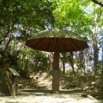 champignon_parc