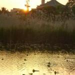 coucher_soleil_ueno02