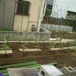 jardin_papay_debut_mai2009