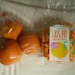 oranges_yakushima