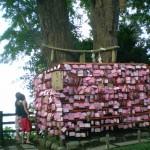 enoshima_arbre_sacre_02