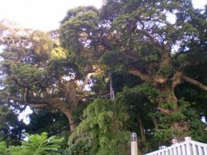 enoshima_vegetation