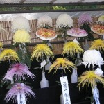 hibiya_garden_expo_chrysanthemes02