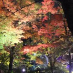 kiyomizu-dera_momiji01