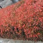 okutama_automne02