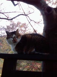 arashiyama_matsukaze_neko