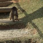 arashiyama_monkey01