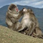 arashiyama_monkey03