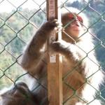 arashiyama_monkey05