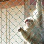 arashiyama_monkey06