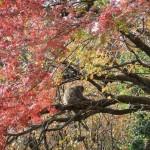 arashiyama_monkey_arbre01