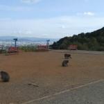 arashiyama_monkey_sommet