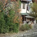 arashiyama_riviere_kaki