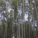 arashiyama_take_no_mori01
