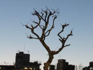 meijidori_harajuku_tree