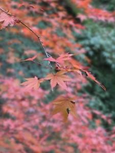 tofuku-ji_feuilles04