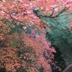 tofuku-ji_feuilles_et_riviere01