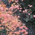 tofuku-ji_feuilles_et_riviere02