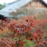 tofuku-ji_feuilles_et_temple02
