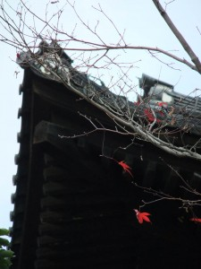 tofuku-ji_feuilles_et_temple03