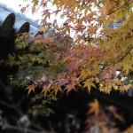 tofuku-ji_feuilles_et_temple04