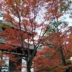 tofuku-ji_feuilles_et_temple05