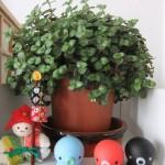 plante_ikea02