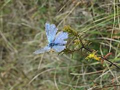 flickr_papillon