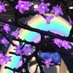 pgw_arbre_lumiere01