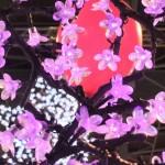 pgw_arbre_lumiere02