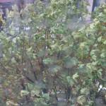 pluie_arbre
