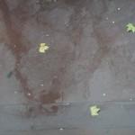 pluie_feuilles