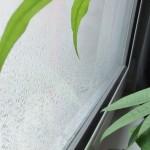 pluie_plante