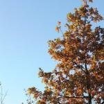 automne01