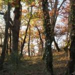 automne02