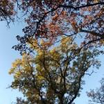 automne03