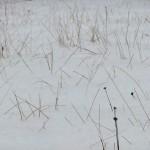 neige_noel_2010_plantes02