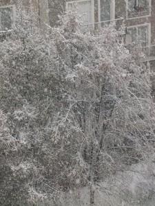 neige_paris_arbres
