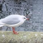 kensington_park_oiseau01