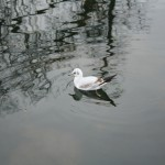 kensington_park_oiseau02
