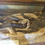 sh_museum_detail06