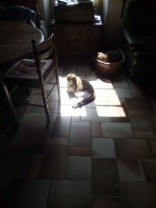 chien-et-chat1
