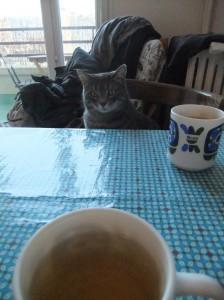 tea_time_cat