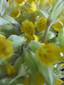 fleurs03
