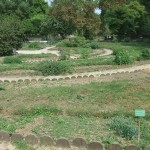 jardin_botanique01