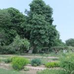 jardin_botanique02