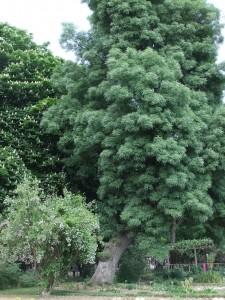 jardin_botanique03